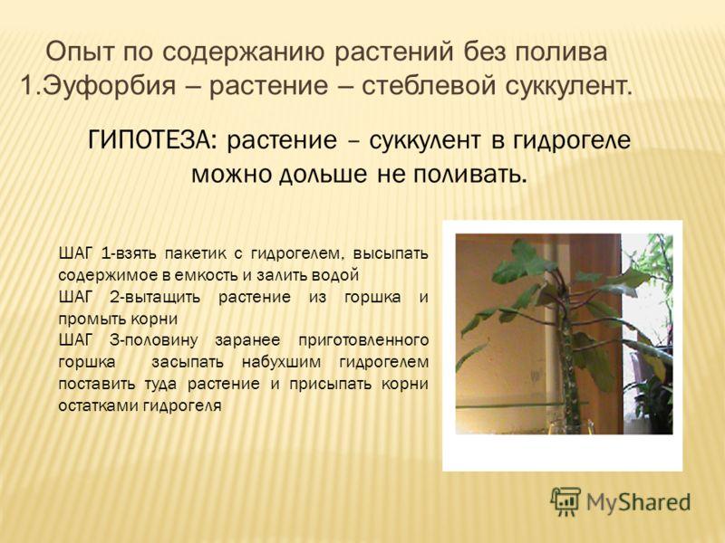 ГИПОТЕЗА: растение – суккулент в гидрогеле можно дольше не поливать. ШАГ 1-взять пакетик с гидрогелем, высыпать содержимое в емкость и залить водой ШАГ 2-вытащить растение из горшка и промыть корни ШАГ 3-половину заранее приготовленного горшка засыпа