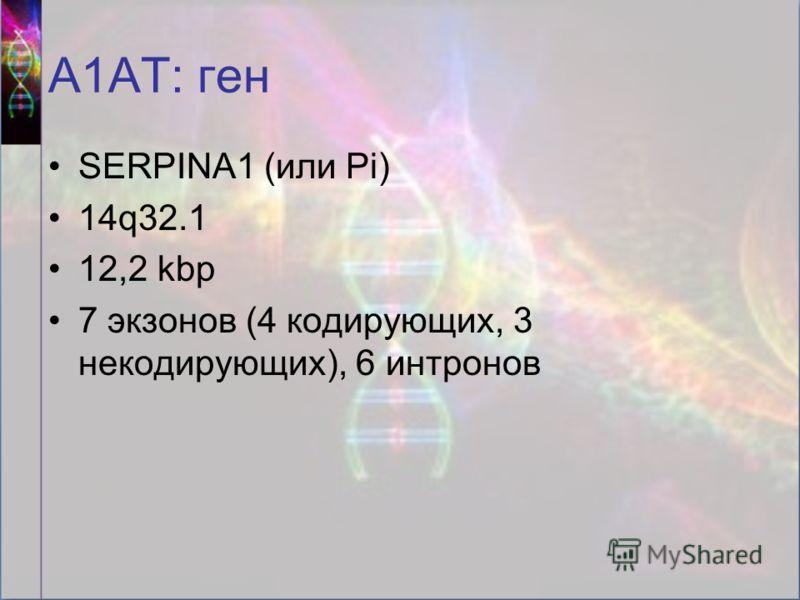 А1АТ: ген SERPINA1 (или Pi) 14q32.1 12,2 kbp 7 экзонов (4 кодирующих, 3 некодирующих), 6 интронов