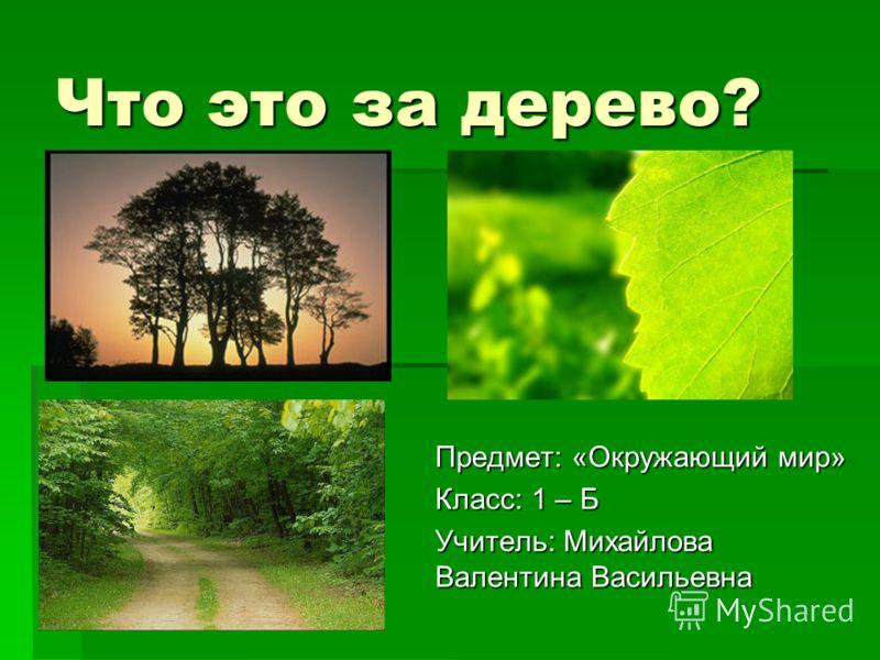 Что это за дерево? Предмет: «Окружающий мир» Класс: 1 – Б Учитель: Михайлова Валентина Васильевна