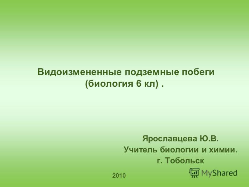 Видоизмененные подземные побеги (биология 6 кл). Ярославцева Ю.В. Учитель биологии и химии. г. Тобольск 2010