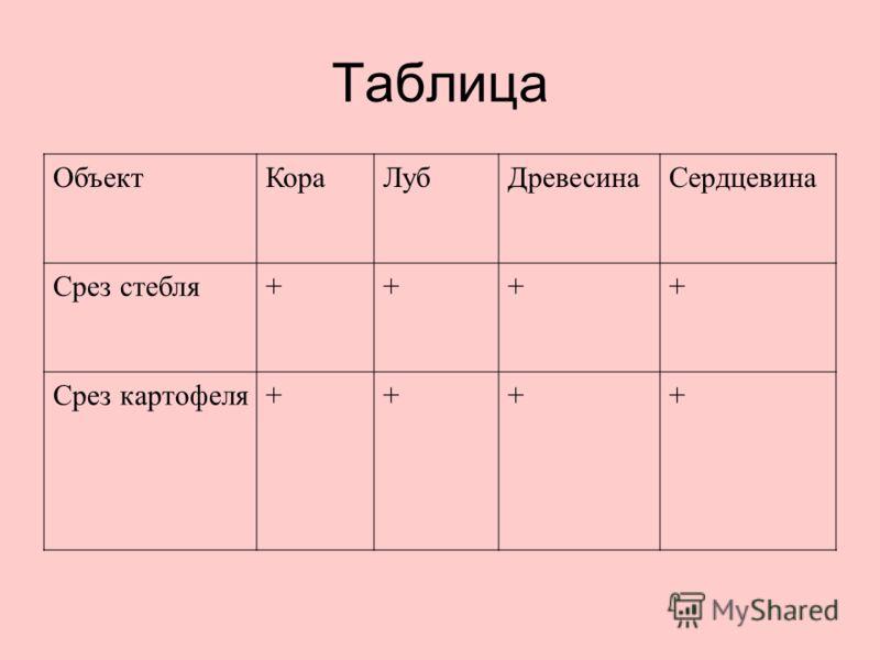 Таблица ОбъектКораЛубДревесинаСердцевина Срез стебля++++ Срез картофеля++++