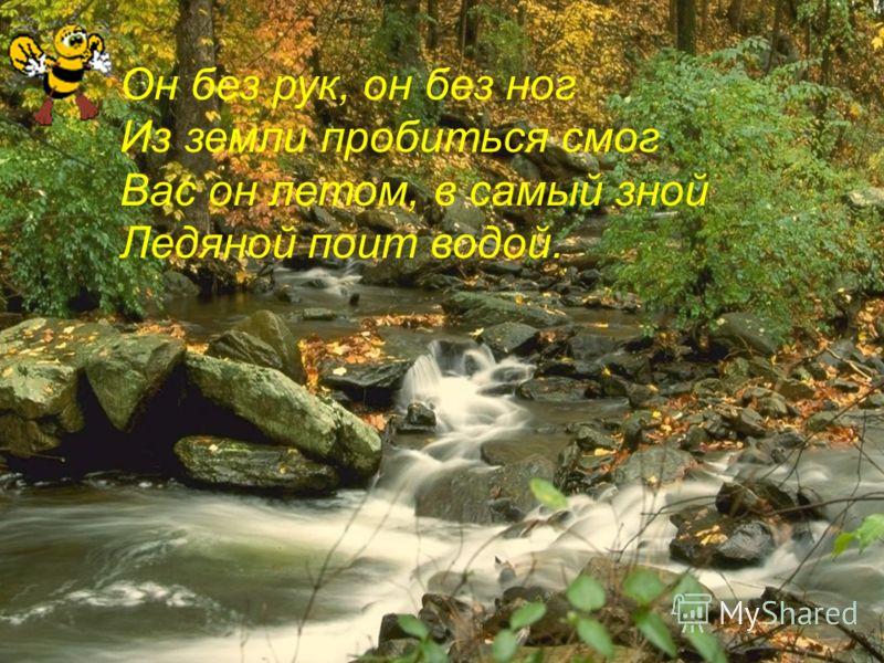 Он без рук, он без ног Из земли пробиться смог Вас он летом, в самый зной Ледяной поит водой.