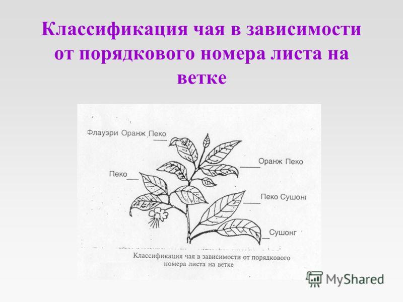 Классификация чая в зависимости от порядкового номера листа на ветке