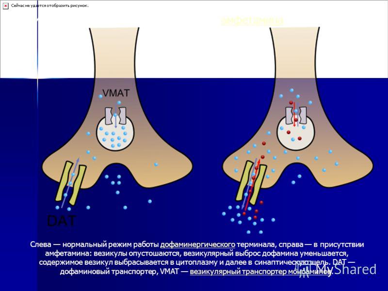 Cлева нормальный режим работы дофаминергического терминала, справа в присутствии амфетамина: везикулы опустошаются, везикулярный выброс дофамина уменьшается, содержимое везикул выбрасывается в цитоплазму и далее в синаптическую щель. DAT дофаминовый