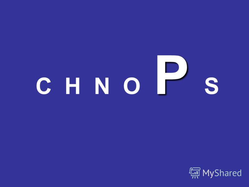 P C H N O P S