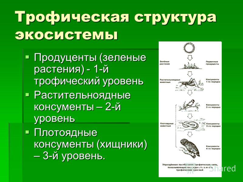 Трофическая структура экосистемы Продуценты (зеленые растения) - 1-й трофический уровень Продуценты (зеленые растения) - 1-й трофический уровень Растительноядные консументы – 2-й уровень Растительноядные консументы – 2-й уровень Плотоядные консументы