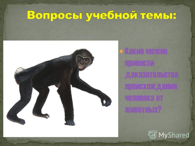 Какие можно привести доказательства происхождения человека от животных?