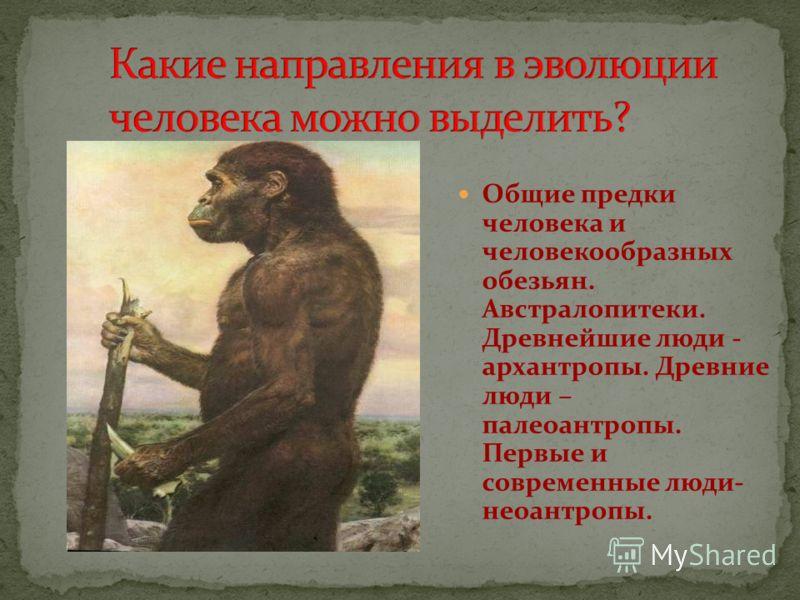Общие предки человека и человекообразных обезьян. Австралопитеки. Древнейшие люди - архантропы. Древние люди – палеоантропы. Первые и современные люди- неоантропы.