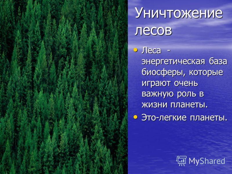Уничтожение лесов Леса - энергетическая база биосферы, которые играют очень важную роль в жизни планеты. Леса - энергетическая база биосферы, которые играют очень важную роль в жизни планеты. Это-легкие планеты. Это-легкие планеты.