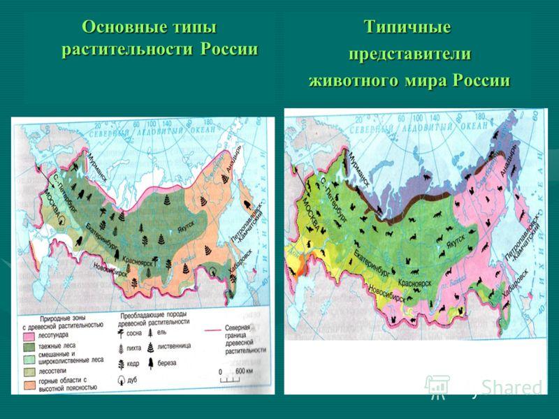 Основные типы растительности России Типичные представители животного мира России