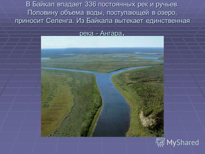 В Байкал впадает 336 постоянных рек и ручьев. Половину объема воды, поступающей в озеро, приносит Селенга. Из Байкала вытекает единственная река - Ангара.