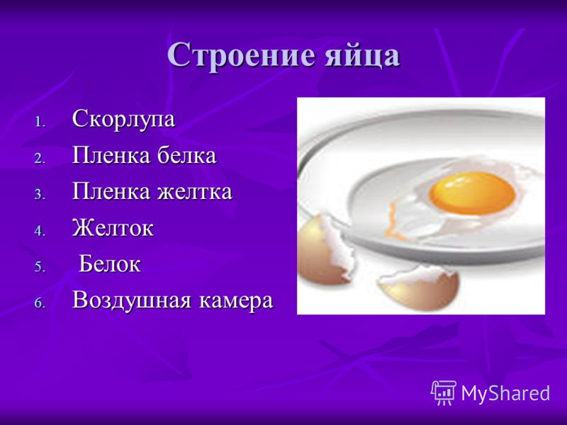 Строение яйца 1. Скорлупа 2. Пленка белка 3. Пленка желтка 4. Желток 5. Белок 6. Воздушная камера