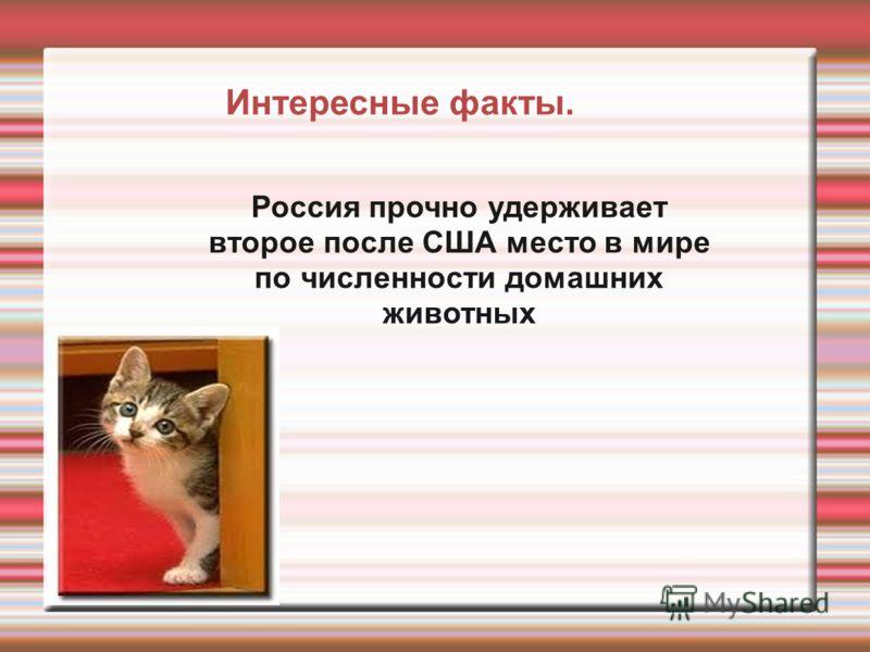 Россия прочно удерживает второе после США место в мире по численности домашних животных Интересные факты.