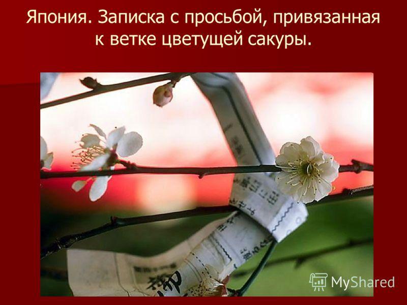 Япония. Записка с просьбой, привязанная к ветке цветущей сакуры.