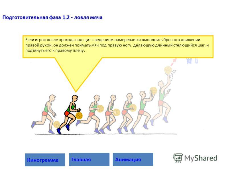 Если игрок после прохода под щит с ведением намеревается выполнить бросок в движении правой рукой, он должен поймать мяч под правую ногу, делающую длинный стелющийся шаг, и подтянуть его к правому плечу. Подготовительная фаза 1.2 - ловля мяча Анимаци
