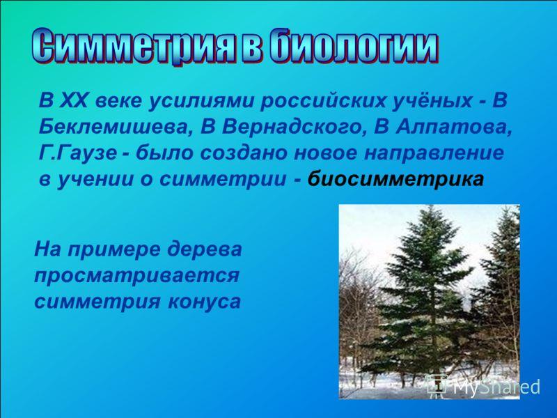В XX веке усилиями российских учёных - В Беклемишева, В Вернадского, В Алпатова, Г.Гаузе - было создано новое направление в учении о симметрии - биосимметрика На примере дерева просматривается симметрия конуса