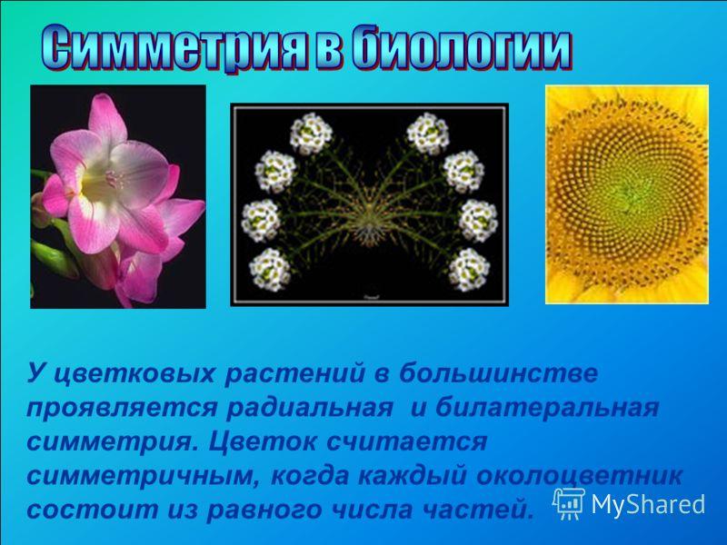 У цветковых растений в большинстве проявляется радиальная и билатеральная симметрия. Цветок считается симметричным, когда каждый околоцветник состоит из равного числа частей.