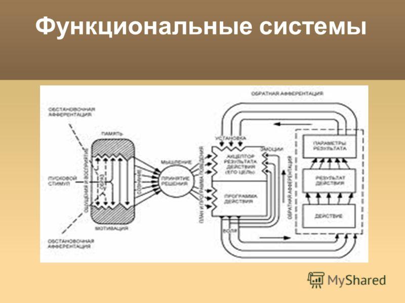 Функциональные системы