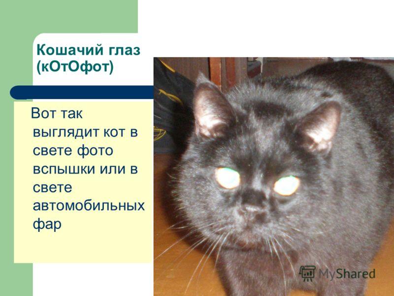 Кошачий глаз (кОтОфот) Вот так выглядит кот в свете фото вспышки или в свете автомобильных фар