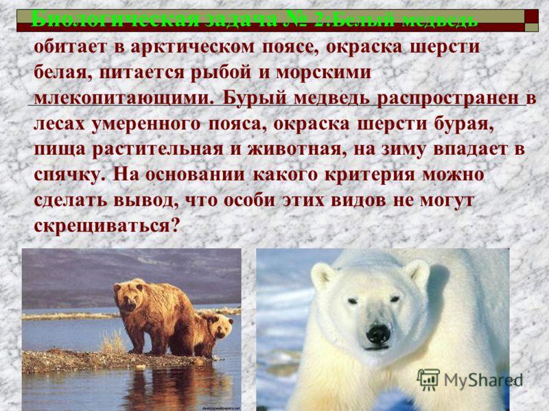 Биологическая задача 2:Белый медведь обитает в арктическом поясе, окраска шерсти белая, питается рыбой и морскими млекопитающими. Бурый медведь распространен в лесах умеренного пояса, окраска шерсти бурая, пища растительная и животная, на зиму впадае