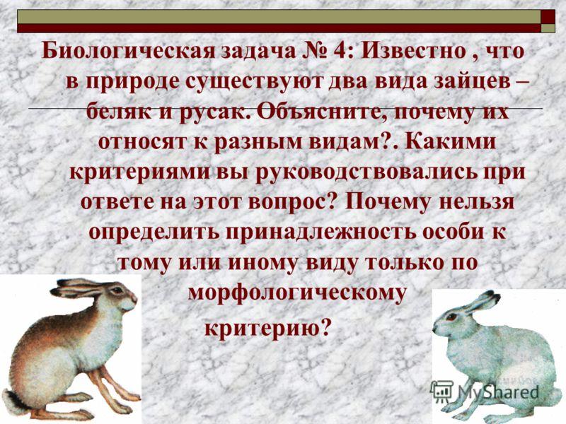 Биологическая задача 4: Известно, что в природе существуют два вида зайцев – беляк и русак. Объясните, почему их относят к разным видам?. Какими критериями вы руководствовались при ответе на этот вопрос? Почему нельзя определить принадлежность особи