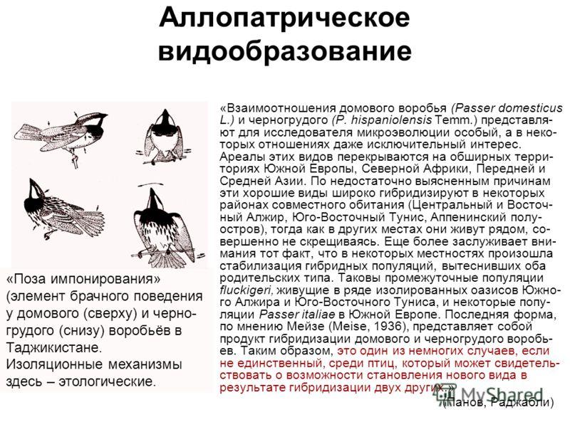 Аллопатрическое видообразование «Взаимоотношения домового воробья (Passer domesticus L.) и черногрудого (P. hispaniolensis Temm.) представля- ют для исследователя микроэволюции особый, а в неко- торых отношениях даже исключительный интерес. Ареалы эт