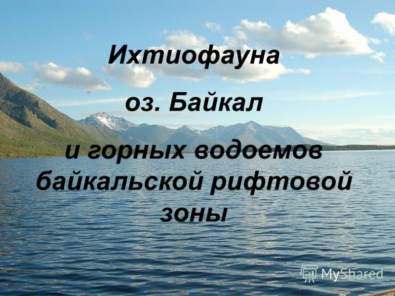 Ихтиофауна оз. Байкал и горных водоемов байкальской рифтовой зоны