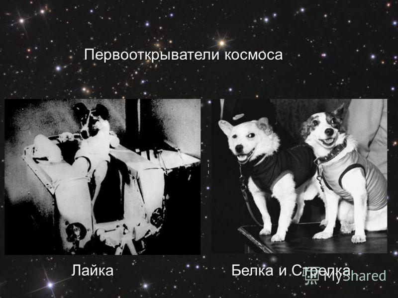 Первооткрыватели космоса Лайка Белка и Стрелка