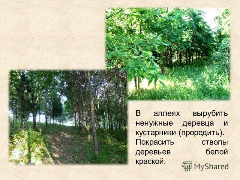 В аллеях вырубить ненужные деревца и кустарники (проредить). Покрасить стволы деревьев белой краской.