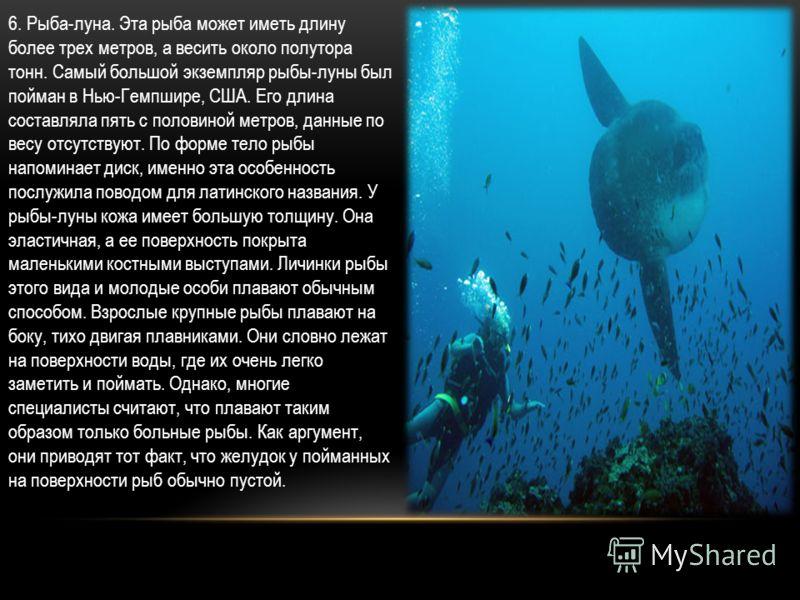 6. Рыба-луна. Эта рыба может иметь длину более трех метров, а весить около полутора тонн. Самый большой экземпляр рыбы-луны был пойман в Нью-Гемпшире, США. Его длина составляла пять с половиной метров, данные по весу отсутствуют. По форме тело рыбы н