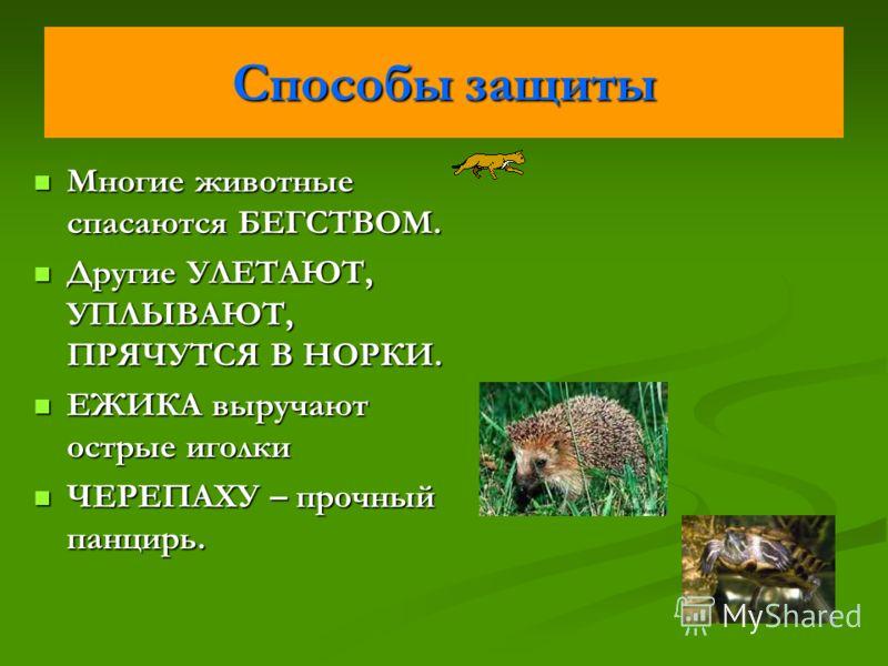 Способы защиты Многие животные спасаются БЕГСТВОМ. Многие животные спасаются БЕГСТВОМ. Другие УЛЕТАЮТ, УПЛЫВАЮТ, ПРЯЧУТСЯ В НОРКИ. Другие УЛЕТАЮТ, УПЛЫВАЮТ, ПРЯЧУТСЯ В НОРКИ. ЕЖИКА выручают острые иголки ЕЖИКА выручают острые иголки ЧЕРЕПАХУ – прочны
