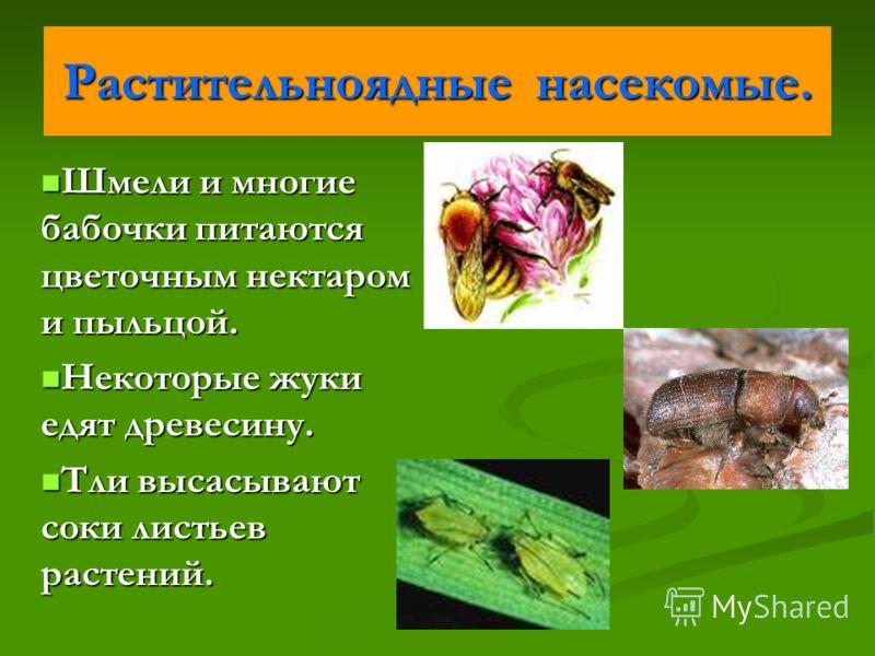 Растительноядные насекомые. Шмели и многие бабочки питаются цветочным нектаром и пыльцой. Шмели и многие бабочки питаются цветочным нектаром и пыльцой. Некоторые жуки едят древесину. Некоторые жуки едят древесину. Тли высасывают соки листьев растений