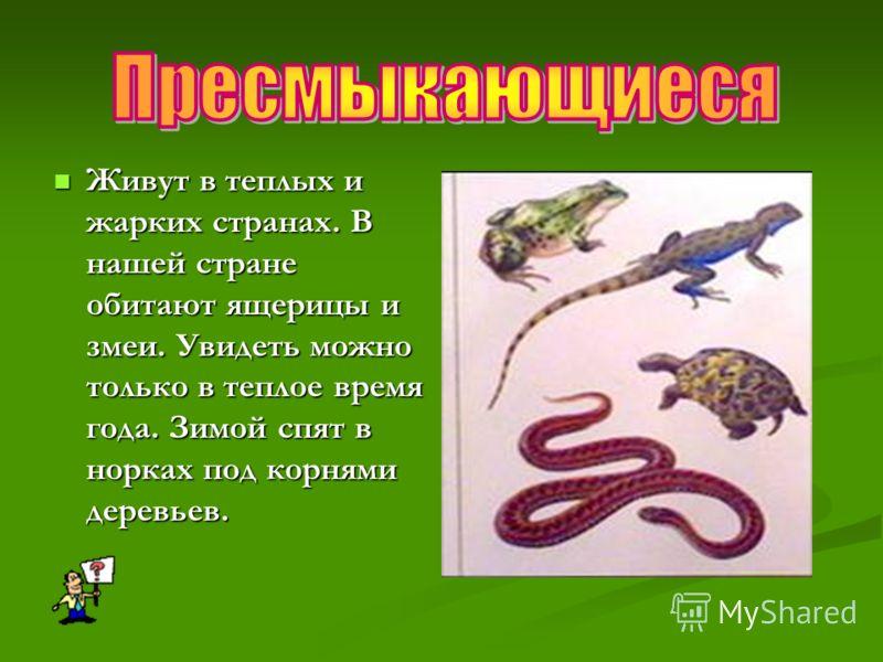 Живут в теплых и жарких странах. В нашей стране обитают ящерицы и змеи. Увидеть можно только в теплое время года. Зимой спят в норках под корнями деревьев. Живут в теплых и жарких странах. В нашей стране обитают ящерицы и змеи. Увидеть можно только в
