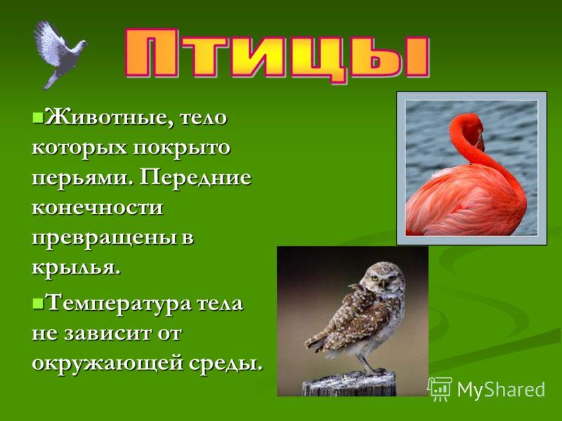 Животные, тело которых покрыто перьями. Передние конечности превращены в крылья. Животные, тело которых покрыто перьями. Передние конечности превращены в крылья. Температура тела не зависит от окружающей среды. Температура тела не зависит от окружающ
