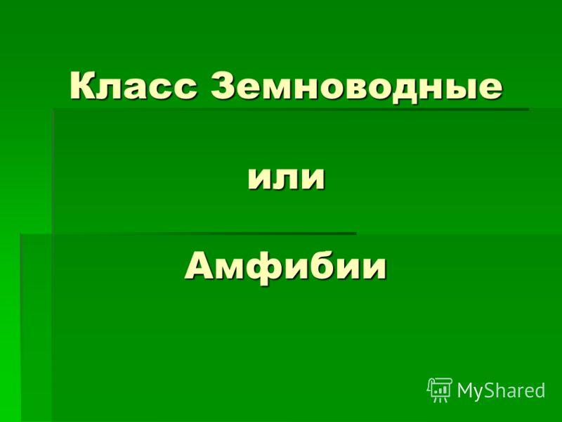Класс Земноводные или Амфибии Класс Земноводные или Амфибии