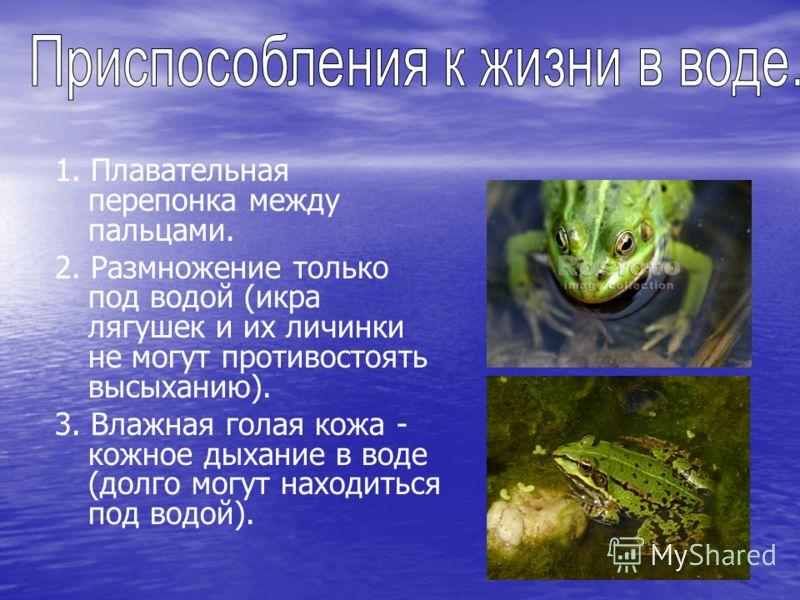 1. Плавательная перепонка между пальцами. 2. Размножение только под водой (икра лягушек и их личинки не могут противостоять высыханию). 3. Влажная голая кожа - кожное дыхание в воде (долго могут находиться под водой).