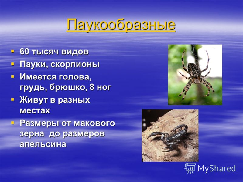 Паукообразные 60 тысяч видов 60 тысяч видов Пауки, скорпионы Пауки, скорпионы Имеется голова, грудь, брюшко, 8 ног Имеется голова, грудь, брюшко, 8 ног Живут в разных местах Живут в разных местах Размеры от макового зерна до размеров апельсина Размер
