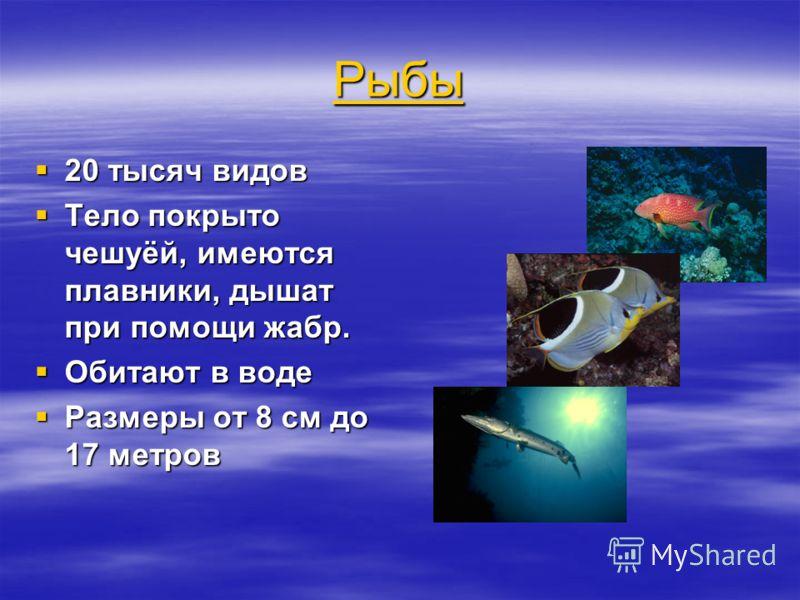 Рыбы 20 тысяч видов 20 тысяч видов Тело покрыто чешуёй, имеются плавники, дышат при помощи жабр. Тело покрыто чешуёй, имеются плавники, дышат при помощи жабр. Обитают в воде Обитают в воде Размеры от 8 см до 17 метров Размеры от 8 см до 17 метров