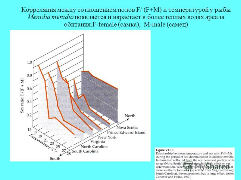 Корреляция между сотношением полов F/ (F+M) и температурой у рыбы Menidia menidia появляется и нарастает в более теплых водах ареала обитания.F-female (самка), M-male (самец)