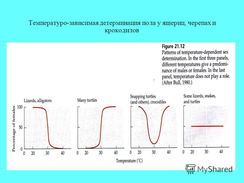 Температуро-зависимая детерминация пола у ящериц, черепах и крокодилов