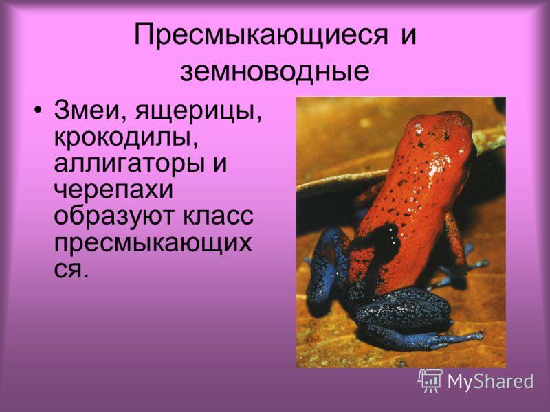 Пресмыкающиеся и земноводные Змеи, ящерицы, крокодилы, аллигаторы и черепахи образуют класс пресмыкающих ся.