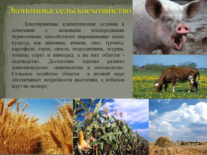 Благоприятные климатические условия в сочетании с мощными плодородными черноземами, способствуют выращиванию таких культур, как пшеница, ячмень, овес, гречиха, картофель, горох, свекла, подсолнечник, огурцы, томаты, сорго и виноград, а на юге области