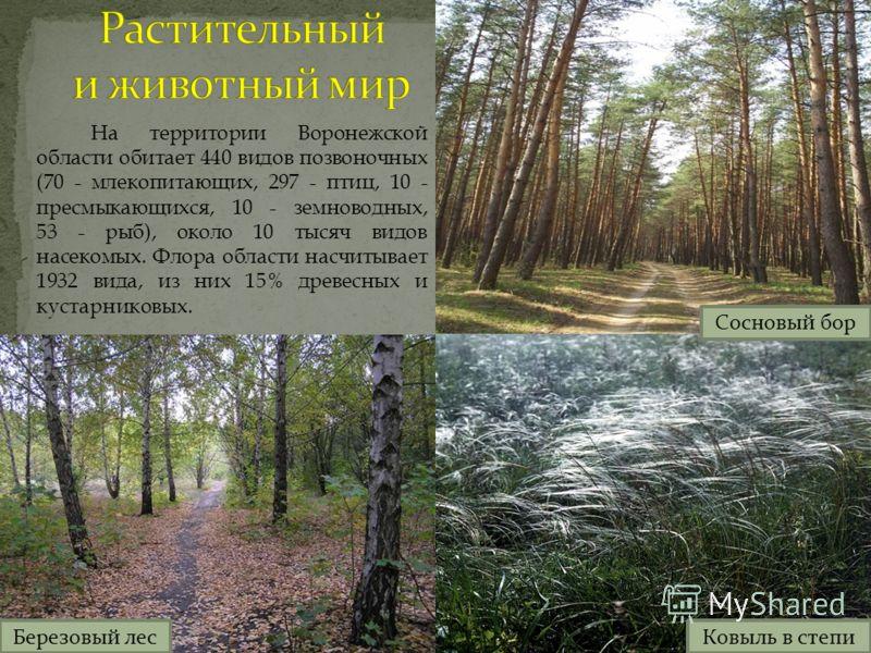 На территории Воронежской области обитает 440 видов позвоночных (70 - млекопитающих, 297 - птиц, 10 - пресмыкающихся, 10 - земноводных, 53 - рыб), около 10 тысяч видов насекомых. Флора области насчитывает 1932 вида, из них 15% древесных и кустарников