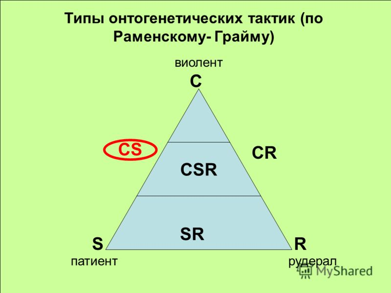 C CSR SR S C R CS CR виолент патиентрудерал Типы онтогенетических тактик (по Раменскому- Грайму)