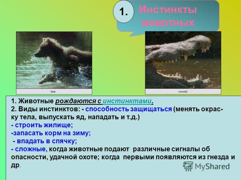 Инстинкты животных 1. Животные рождаются с инстинктами.инстинктами 2. Виды инстинктов: - способность защищаться (менять окрас- ку тела, выпускать яд, нападать и т.д.) - строить жилище; -запасать корм на зиму; - впадать в спячку; - сложные, когда живо