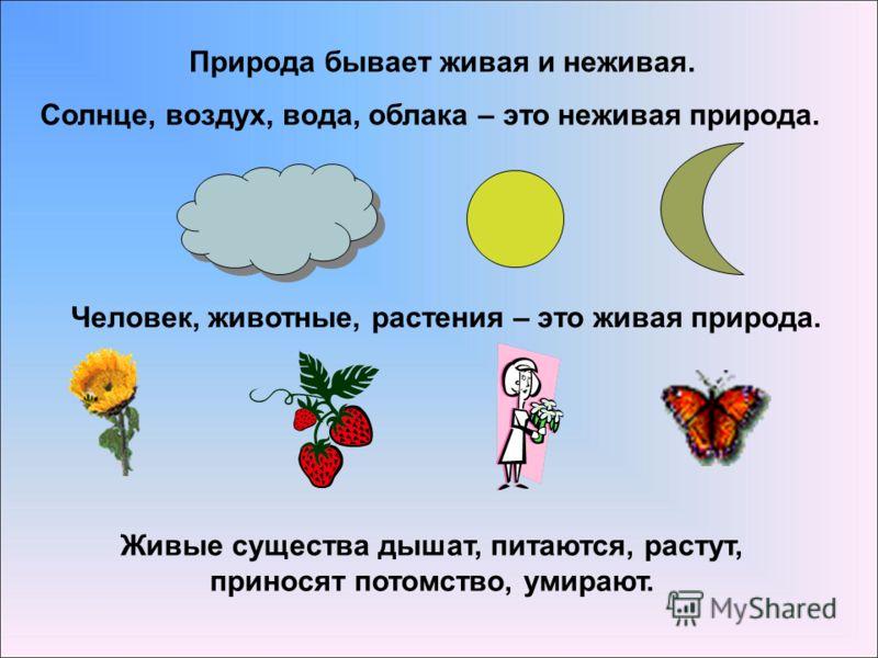 Природа бывает живая и неживая. Солнце, воздух, вода, облака – это неживая природа. Человек, животные, растения – это живая природа. Живые существа дышат, питаются, растут, приносят потомство, умирают.