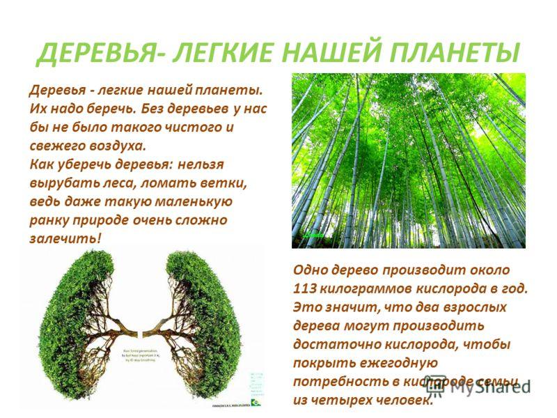 Зачем нужно сажать леса 86