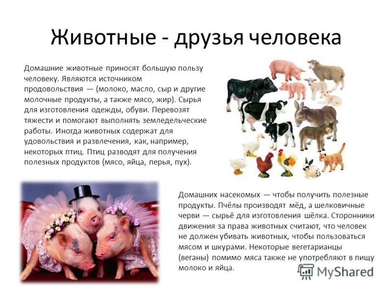 Животные - друзья человека Домашние животные приносят большую пользу человеку. Являются источником продовольствия (молоко, масло, сыр и другие молочные продукты, а также мясо, жир). Сырья для изготовления одежды, обуви. Перевозят тяжести и помогают в