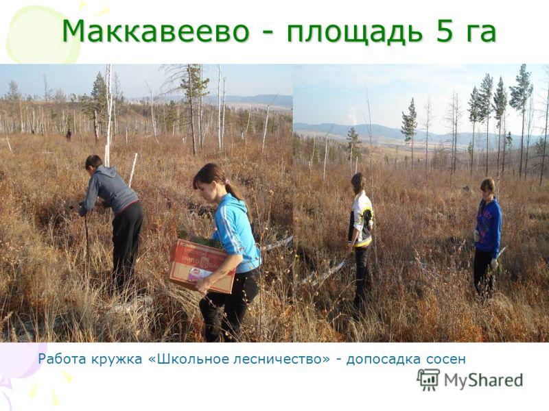 Маккавеево - площадь 5 га Маккавеево - площадь 5 га Работа кружка «Школьное лесничество» - допосадка сосен