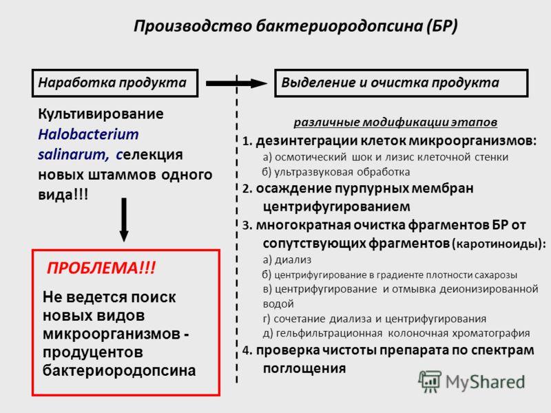 Производство бактериородопсина (БР) 1. дезинтеграции клеток микроорганизмов: а) осмотический шок и лизис клеточной стенки б) ультразвуковая обработка 2. осаждение пурпурных мембран центрифугированием 3. многократная очистка фрагментов БР от сопутству